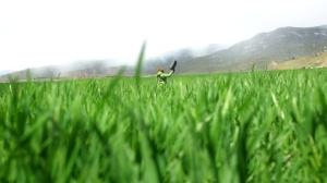 Eva en el prado